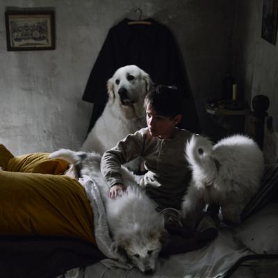 Sébastien, Belle et les chiots