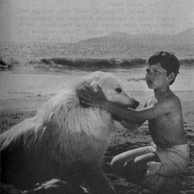 Belle fait peur à un cheval blanc et sa cavalière sur la plage