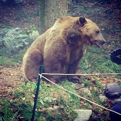 L'ours sur le plateau