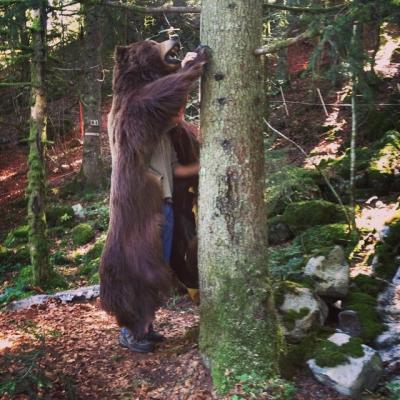 Dans la peau de l'ours