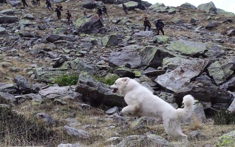 La chienne court pour leur échapper