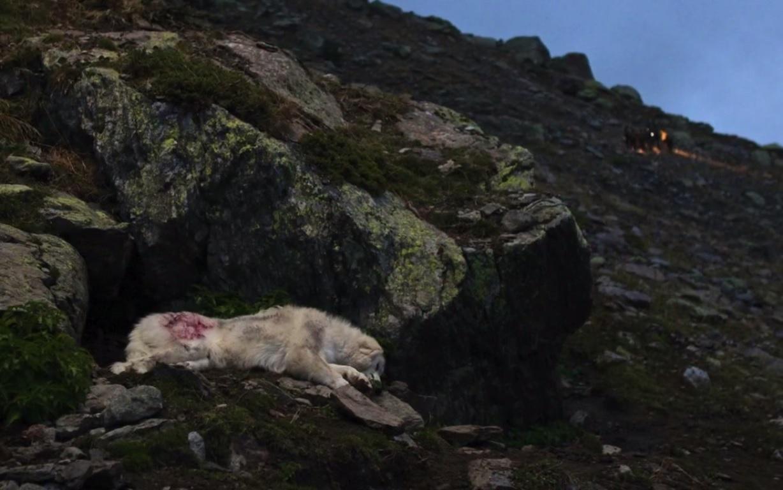 La chienne est blessée, heureusement les chasseurs repartent