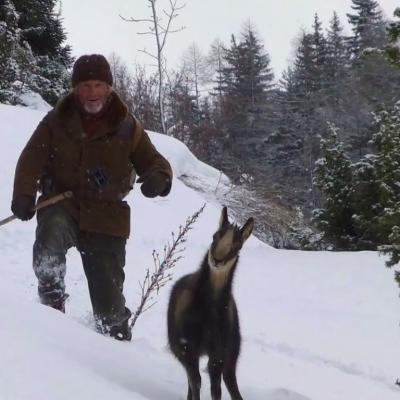 174) César relâche le petit cabri devenu grand