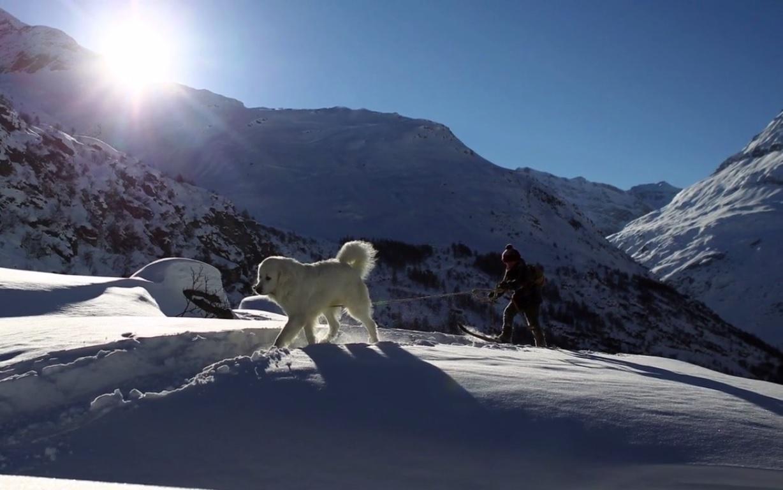 Sébastien tracté par Belle sur ses skis