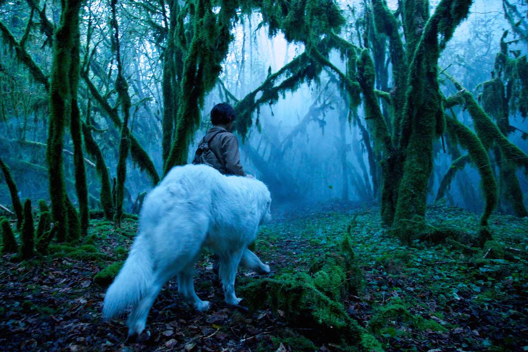 43) Petit poucet dans la forêt