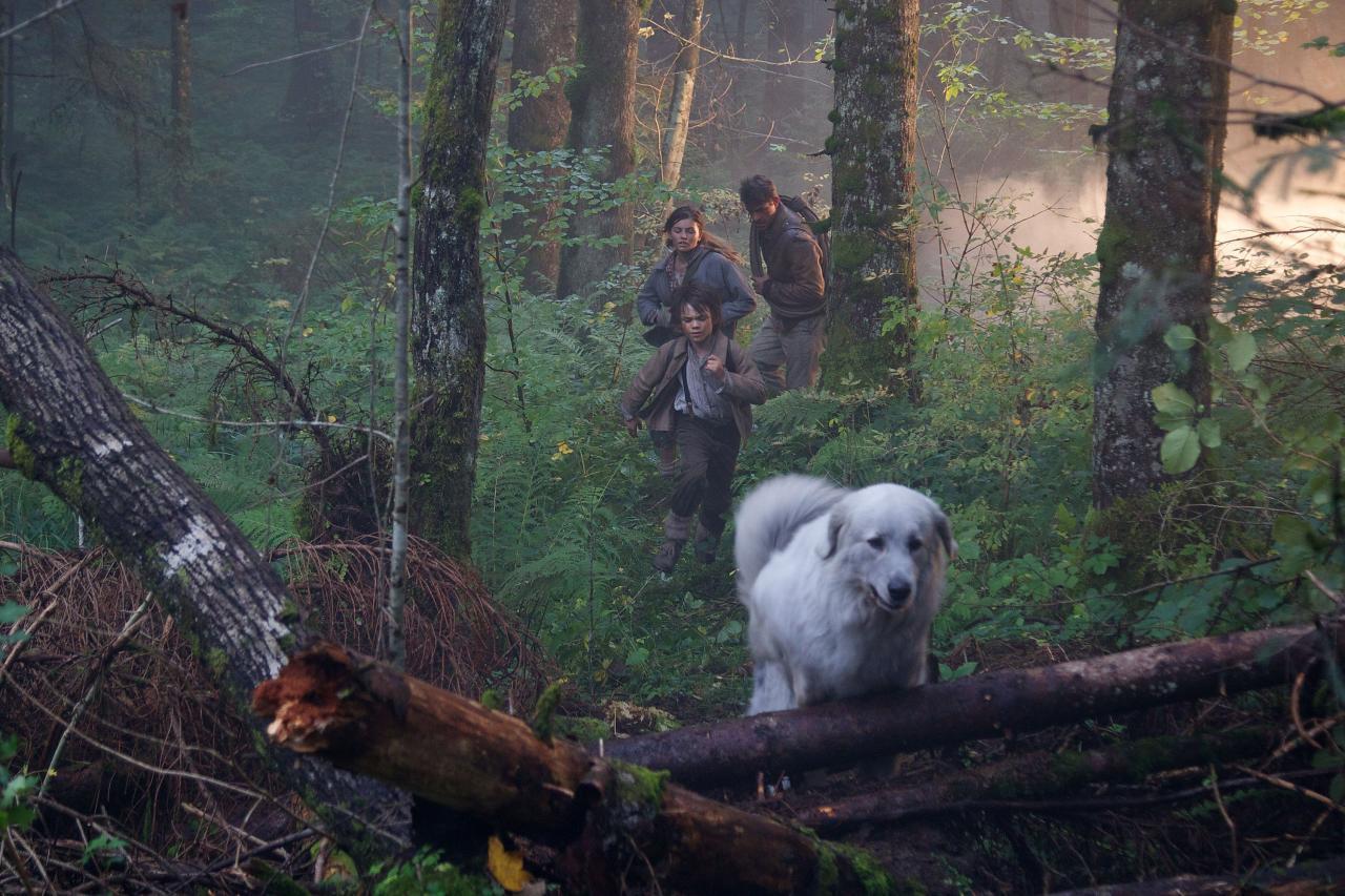 85) La forêt encore intacte