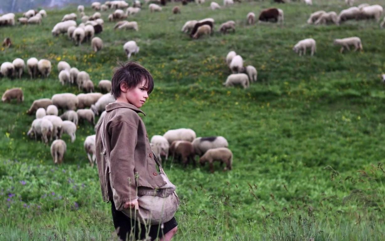 Sébastien en est sur : ce n'est pas son chien qui tue les moutons