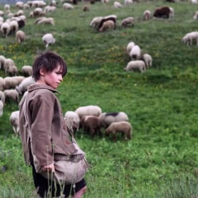 52) Sébastien en est sur : ce n'est pas son chien qui tue les moutons