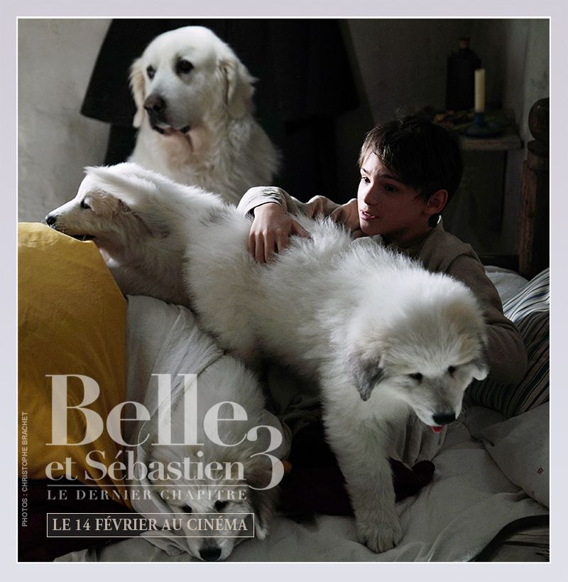 Belle, Sébastien et les chiots