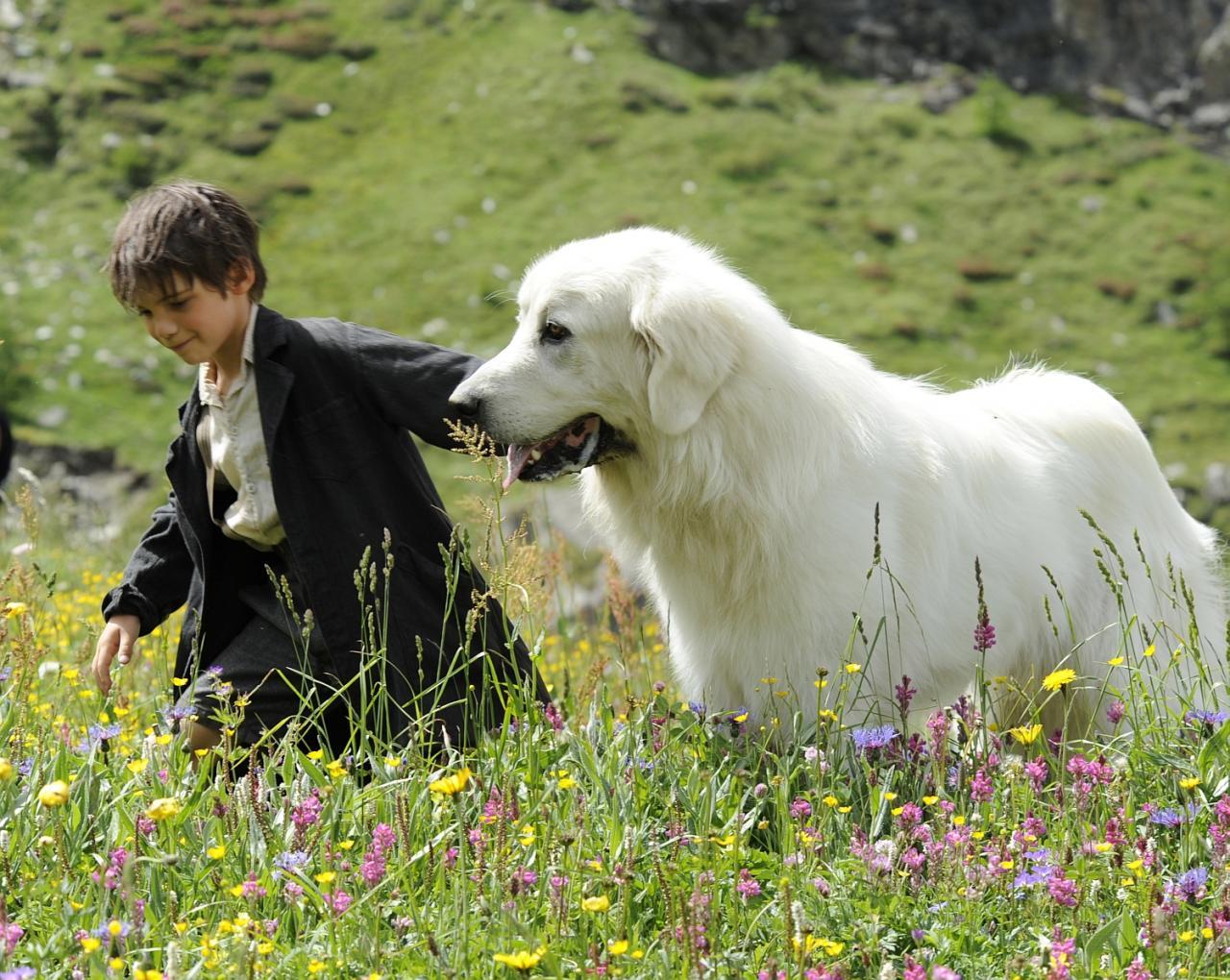 Sébastien parcourt la montagne avec Belle