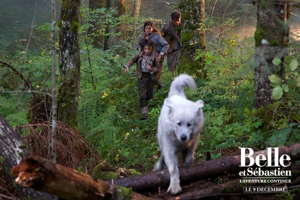 Promo 9 4 chiens interprètent Belle